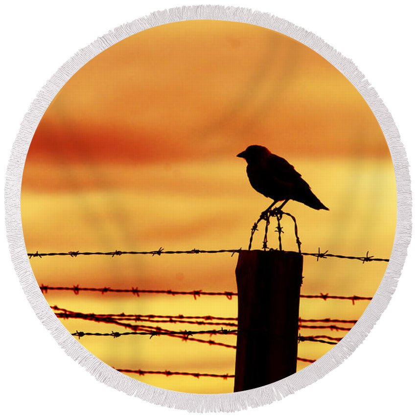 Prison Round Beach Towel featuring the photograph Bird Sitting On Prison Fence by Michal Bednarek