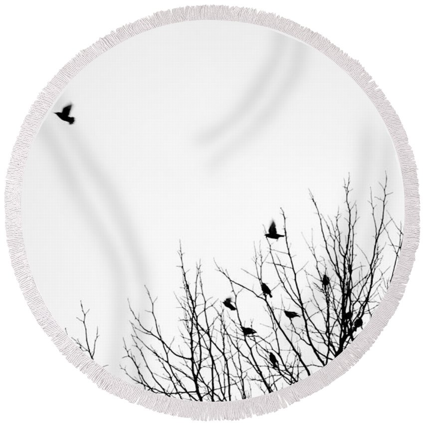 North America Round Beach Towel featuring the photograph Birds In Tree by Jim Corwin