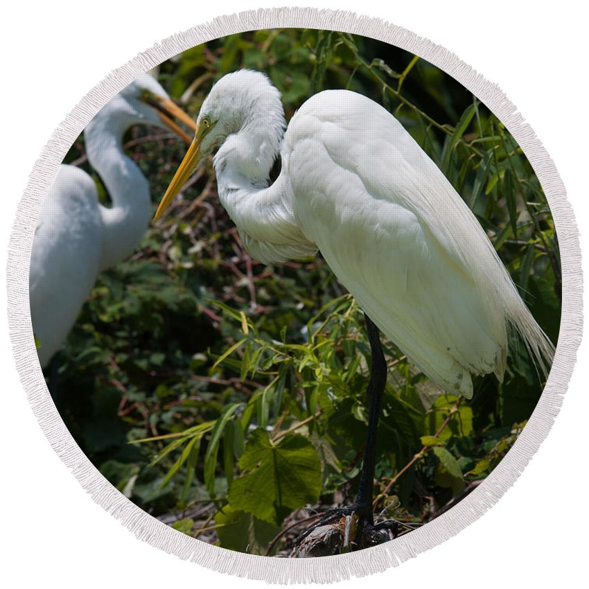 Egret Round Beach Towel featuring the photograph Birds Of A Feather by Dale Powell