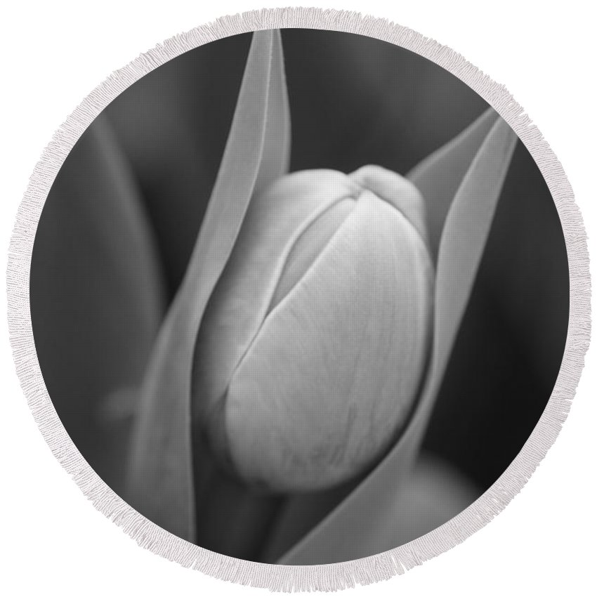 Flowers Round Beach Towel featuring the photograph Birth by Jeffery L Bowers