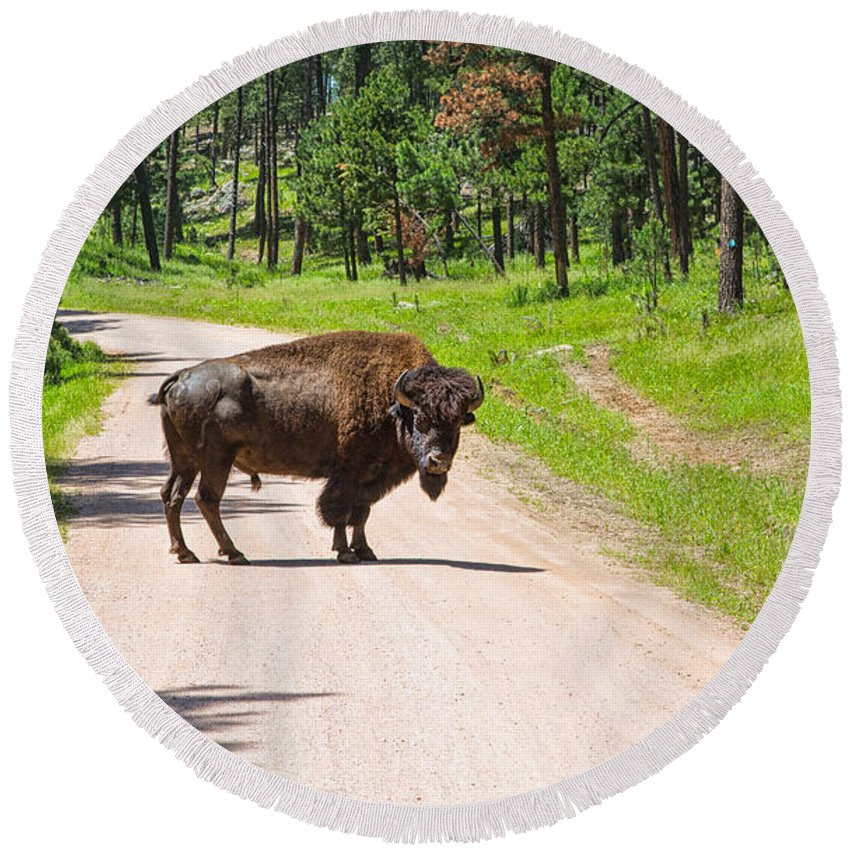 Landscape Round Beach Towel featuring the photograph Bison Blocking The Road by John M Bailey