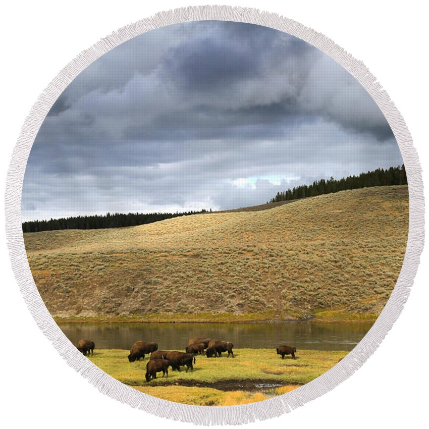 Mountains Round Beach Towel featuring the photograph Bison Grazing Along The Yellowstone River In Hayden Valley by Ed Riche
