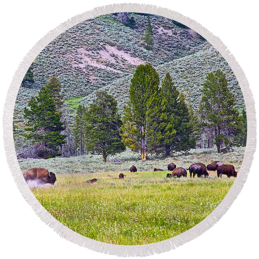 Bison Kicking Up Dust In The Meadow In Yellowstone National Park-wyoming Round Beach Towel featuring the photograph Bison Kicking Up Dust In The Meadow In Yellowstone National Park-wyoming by Ruth Hager