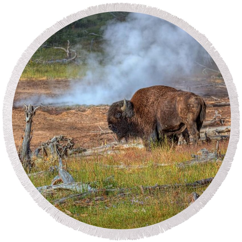 Bison Round Beach Towel featuring the photograph Bison Mud by James Anderson