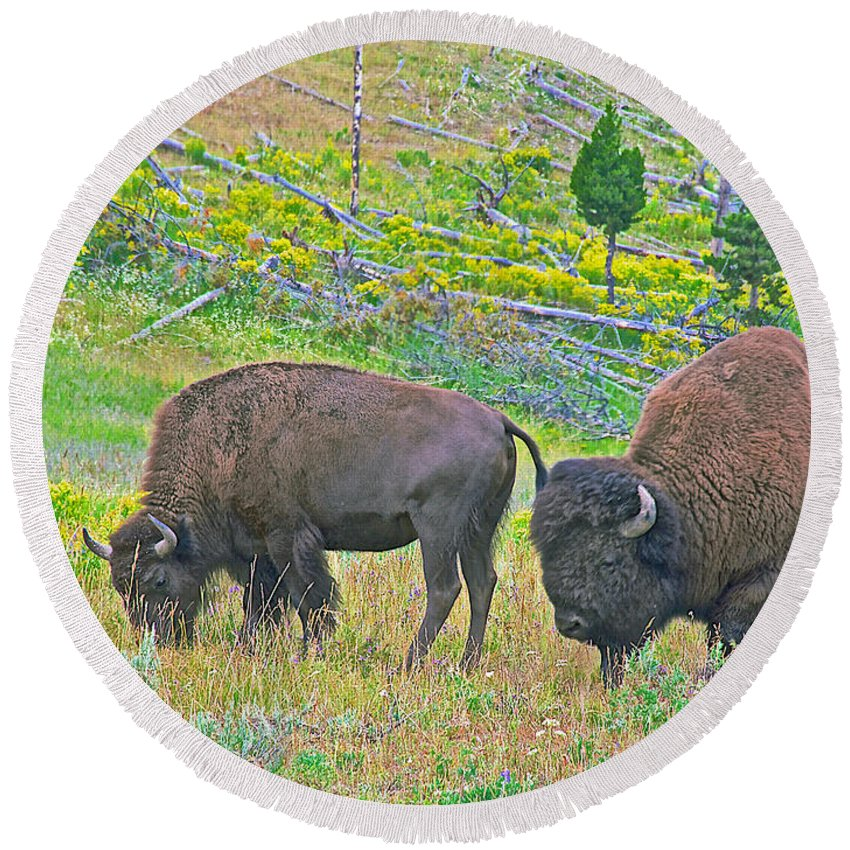 Bison Pair In Hayden Valley In Yellowstone National Park-wyoming Round Beach Towel featuring the photograph Bison Pair In Hayden Valley In Yellowstone National Park-wyoming by Ruth Hager