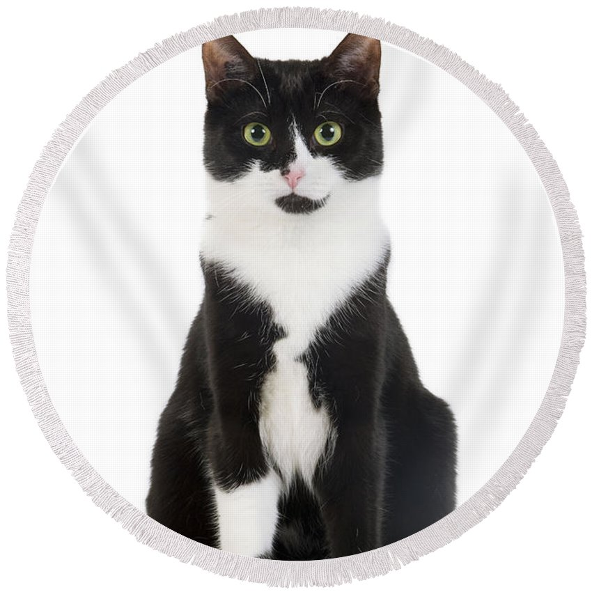 Cat Round Beach Towel featuring the photograph Black & White Cat by Jean-Michel Labat