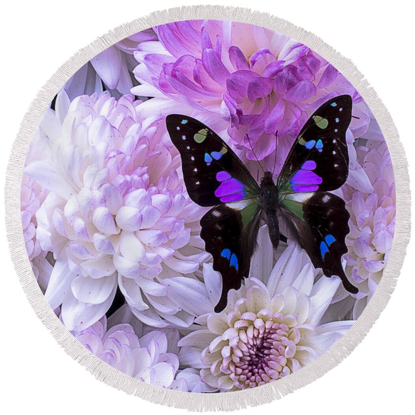 Pink Round Beach Towel featuring the photograph Black And Purple Butterfly On Mums by Garry Gay
