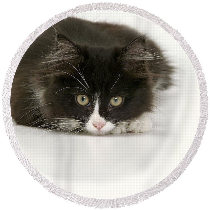 Cat Round Beach Towel featuring the photograph Black-and-white Cat by Jean-Michel Labat