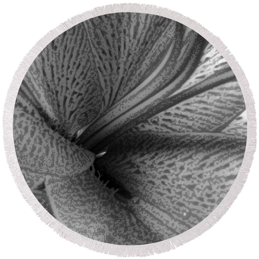 Black And White Round Beach Towel featuring the photograph Black And White Lily Z Map L by Dale Crum