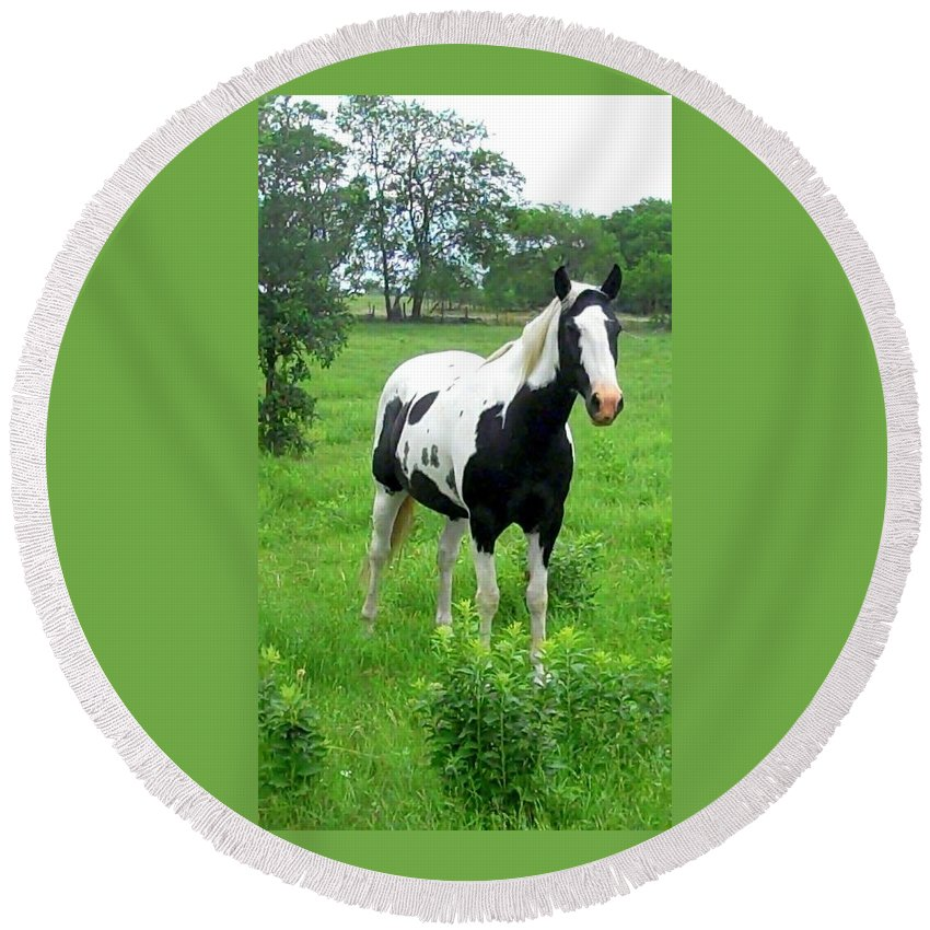 Horse Black And White Grass Trees Horse Posed Round Beach Towel featuring the photograph Black And White Paint Horse by Cindy New