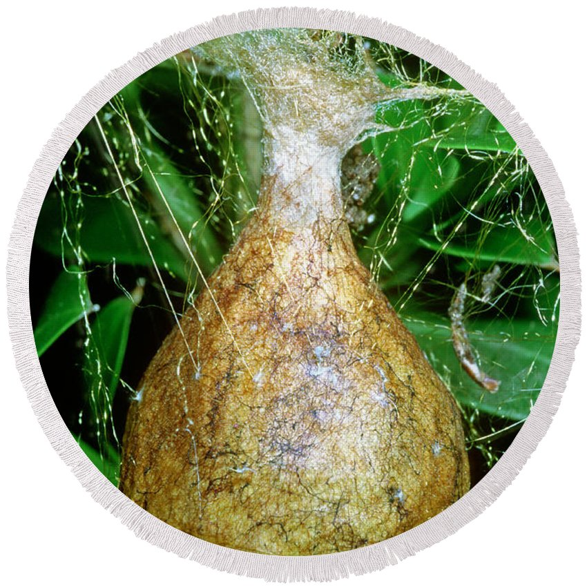 Nature Round Beach Towel featuring the photograph Black And Yellow Garden Spider Egg Sac by Millard H. Sharp