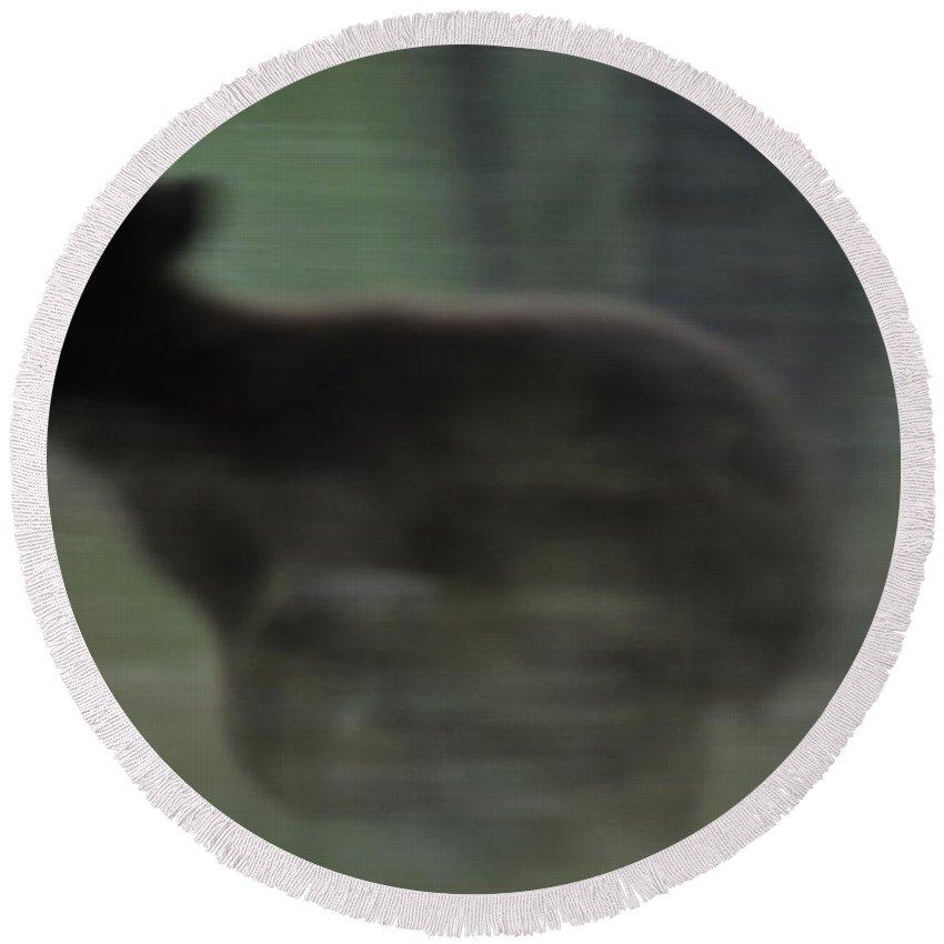 Black Bear Round Beach Towel featuring the photograph Black Bear Cub Running by Frank Madia