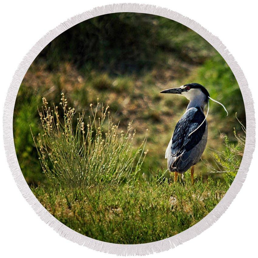 Black-crowned Night Heron Round Beach Towel featuring the photograph Black-crowned Night Heron At Carson Lake Wetlands by Priscilla Burgers