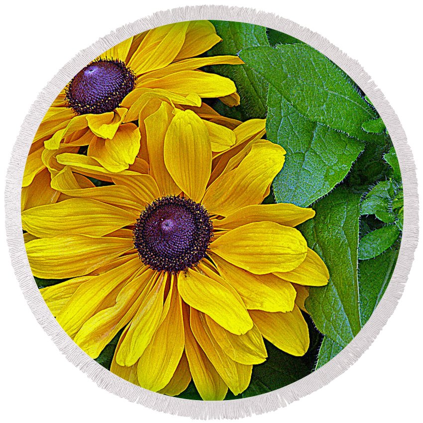 Black-eyed Susan Round Beach Towel featuring the photograph Black-eyed Susan by Tikvah's Hope