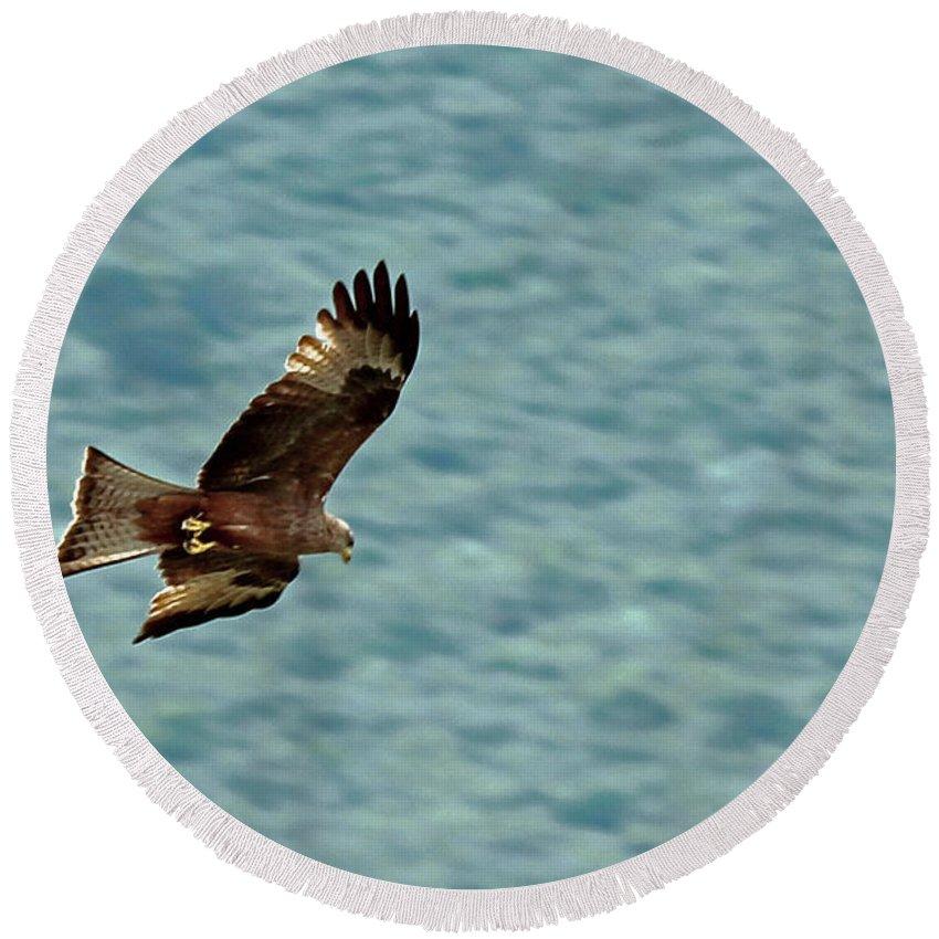 Kite Round Beach Towel featuring the photograph Black Kite by Tony Murtagh