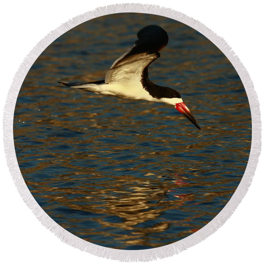 Beach Round Beach Towel featuring the photograph Black Skimmer Reflections by John F Tsumas