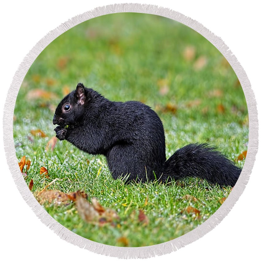Squirrel Round Beach Towel featuring the photograph Black Squirrel by Sharon Talson