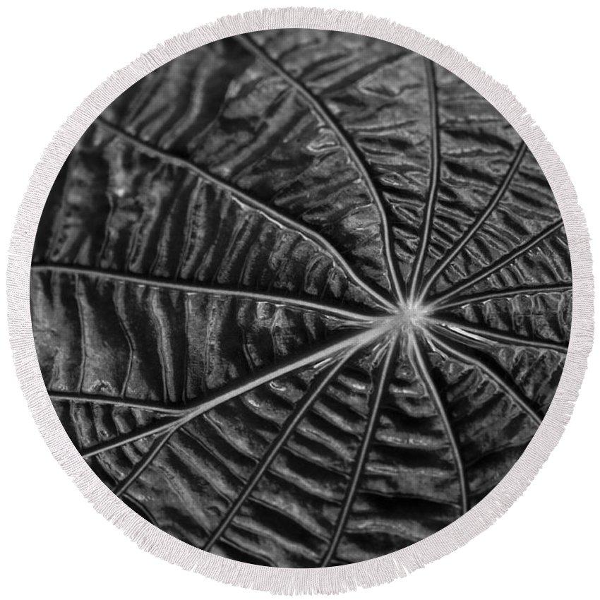 Leaf Round Beach Towel featuring the photograph Black Star.. by Nina Stavlund