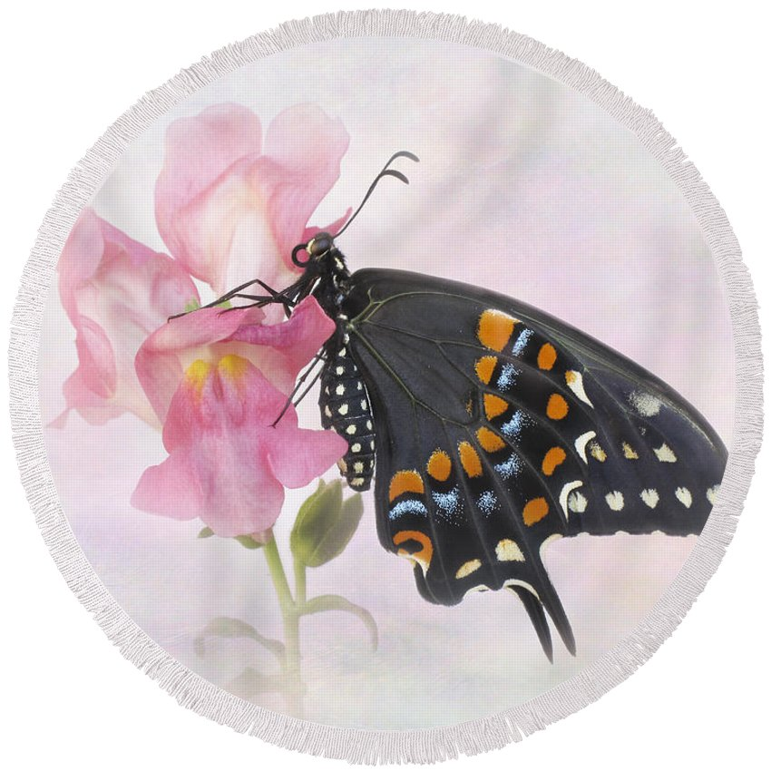 Black Round Beach Towel featuring the photograph Black Swallowtail Iv by David and Carol Kelly