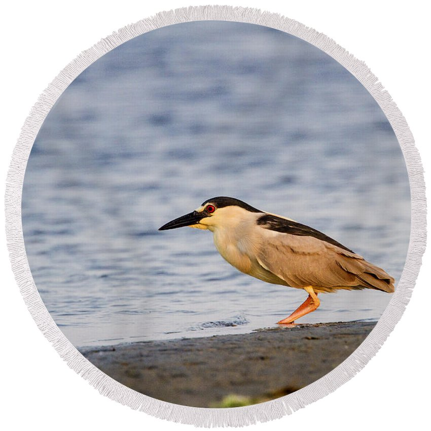 Doug Lloyd Round Beach Towel featuring the photograph Blackcrowned Night Heron by Doug Lloyd