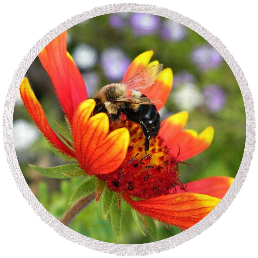 Flower Round Beach Towel featuring the photograph Blanket Flower And Bumblebee by Chris Berry