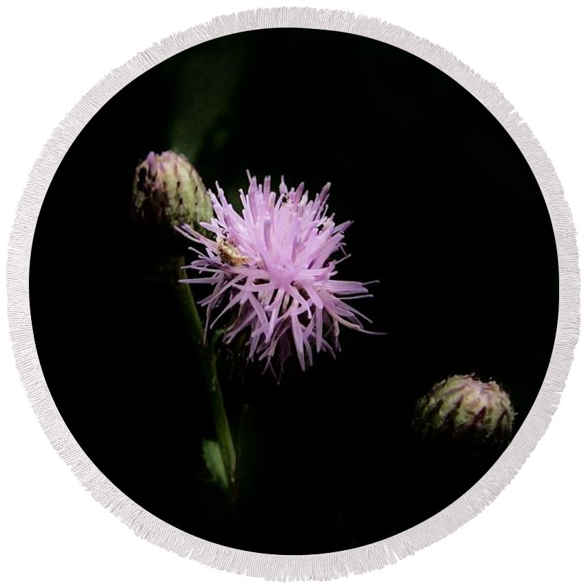 Rough Blazing Star Round Beach Towel featuring the photograph Blazing Star by Eric Noa
