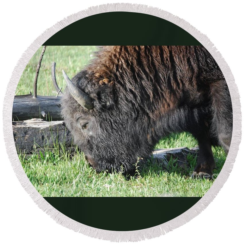 Bison Round Beach Towel featuring the photograph Blessed Bull by Deanna Cagle