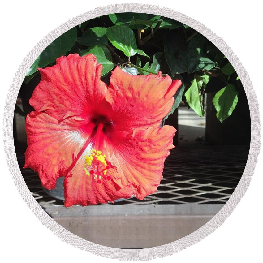 Hibiscus Round Beach Towel featuring the digital art Bloom Where Planted by Shannon Grissom