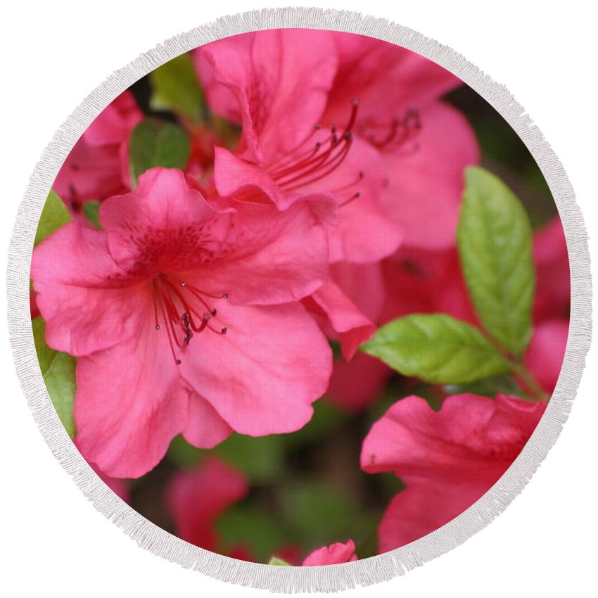 Azalea Round Beach Towel featuring the photograph Blooming Azalea by Living Color Photography Lorraine Lynch