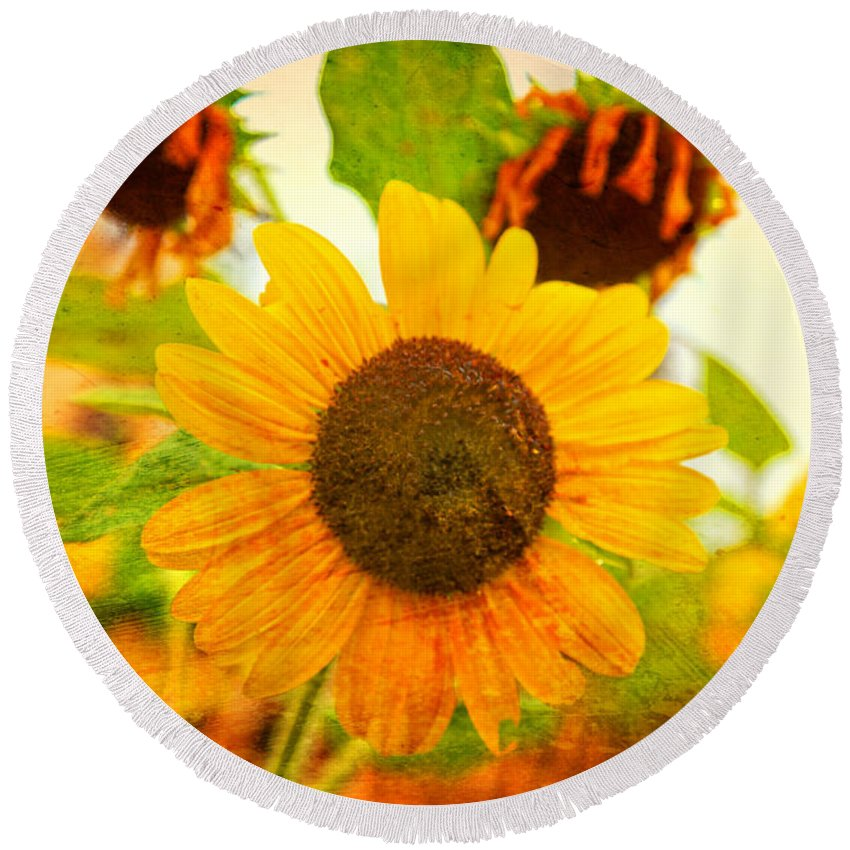 Sunflower Round Beach Towel featuring the photograph Blossoming Sunflower Beauty by Toni Hopper