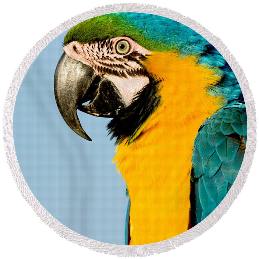 Animal Round Beach Towel featuring the photograph Blue And Gold Macaw by Anthony Mercieca