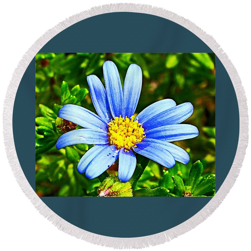 Blue Aster In Park Sierra Near Coarsegold Round Beach Towel featuring the photograph Blue Aster In Park Sierra Near Coarsegold-california  by Ruth Hager
