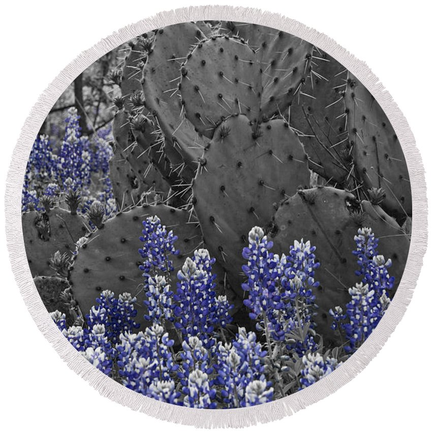 Wildflowers Round Beach Towel featuring the photograph Blue Bonnet Cactus by Douglas Barnard