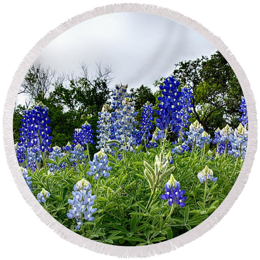 Wildflowers Round Beach Towel featuring the photograph Blue Bonnet Carpet V9 by Douglas Barnard