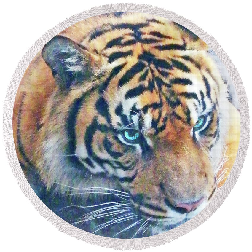 Tiger Round Beach Towel featuring the photograph Blue Eyed Tiger by Lizi Beard-Ward