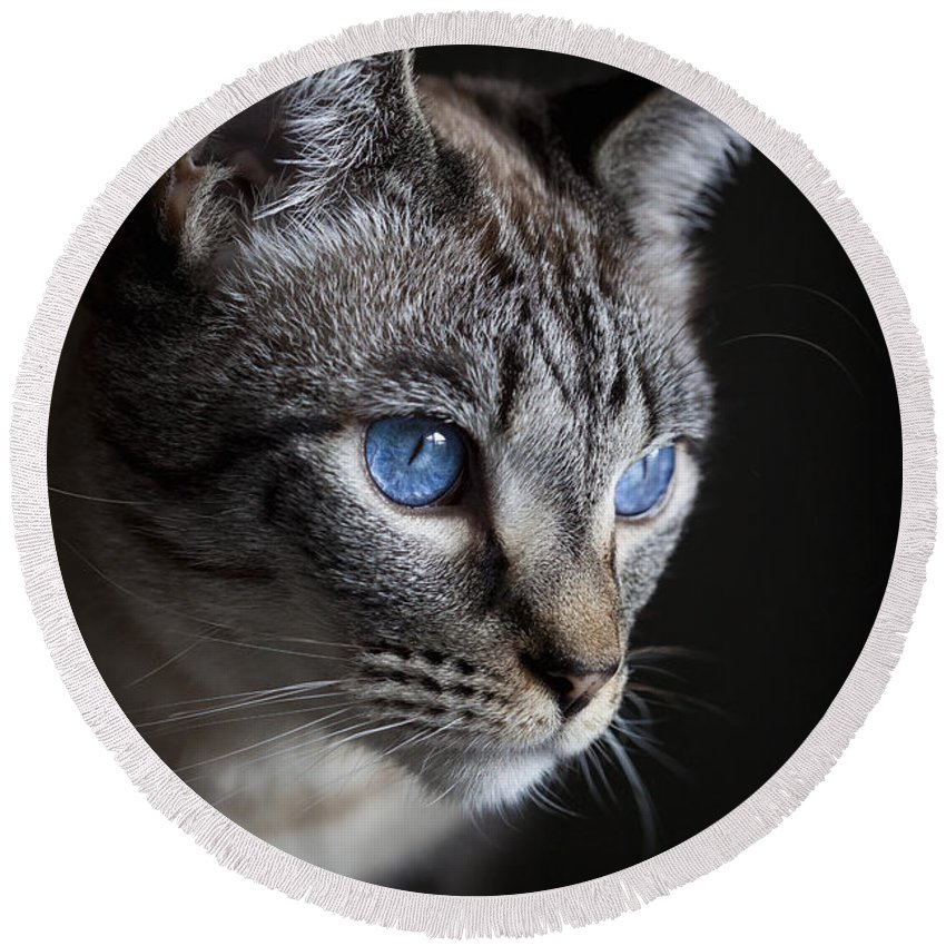 Tabby Round Beach Towel featuring the photograph Blue Eyes by Diane Macdonald