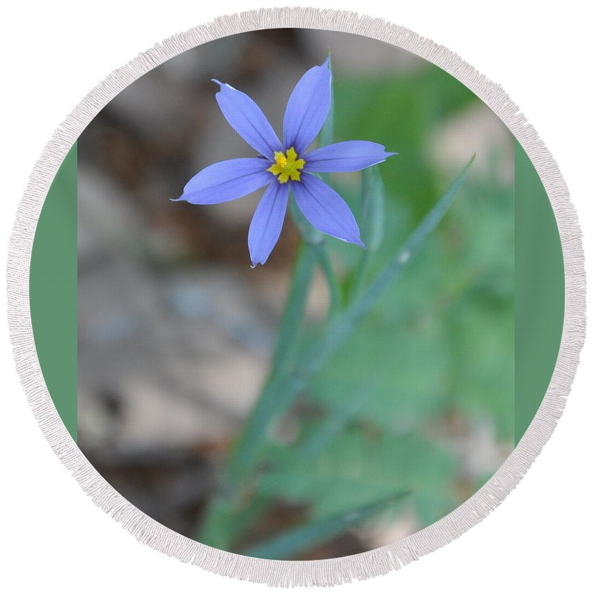 Blue Round Beach Towel featuring the photograph Blue Flower by Frank Madia