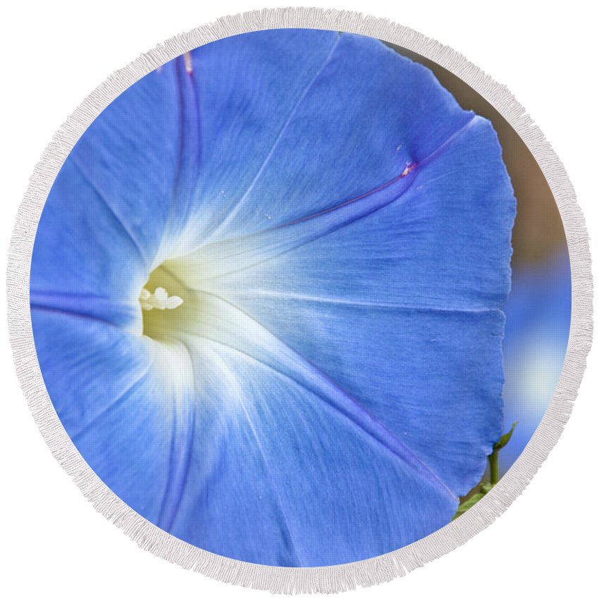 Round Beach Towel featuring the photograph Blue Glories by Cheryl Baxter