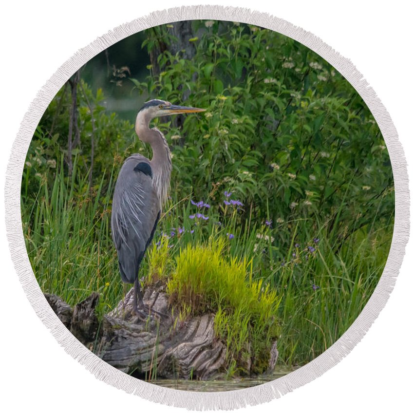 Ontario Round Beach Towel featuring the photograph Blue Heron by Cheryl Baxter