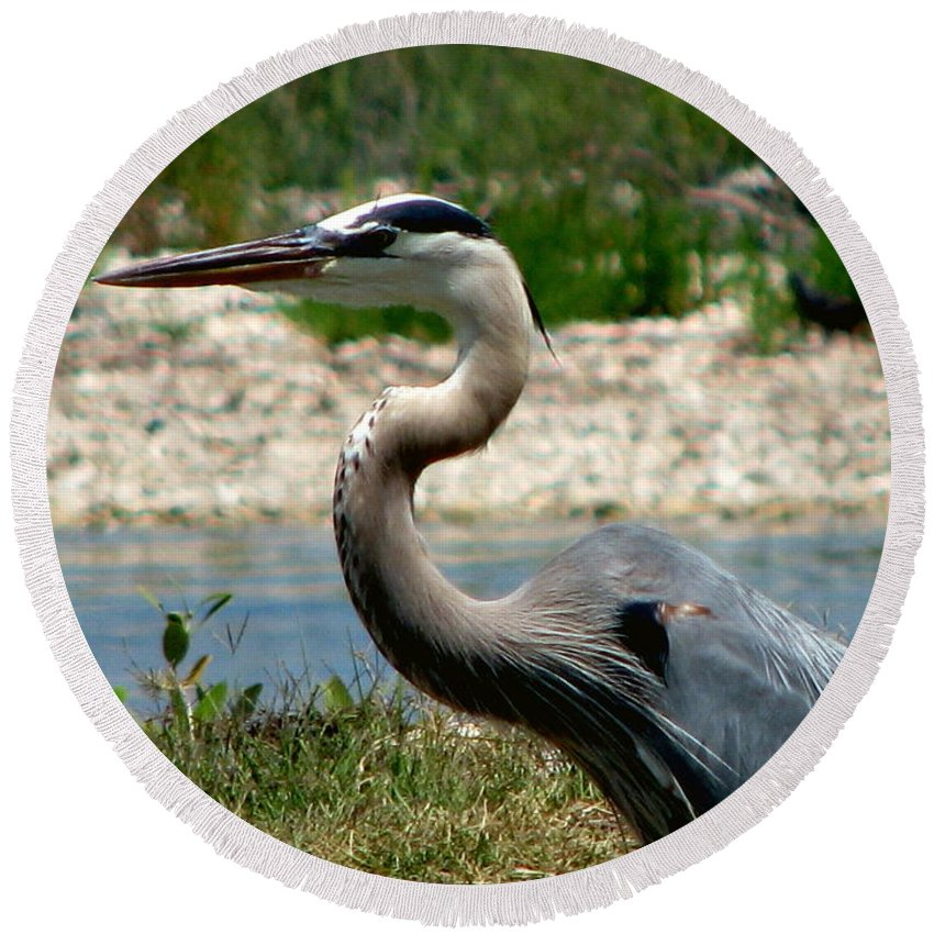 Art For The Wall...patzer Photography Round Beach Towel featuring the photograph Blue Heron by Greg Patzer
