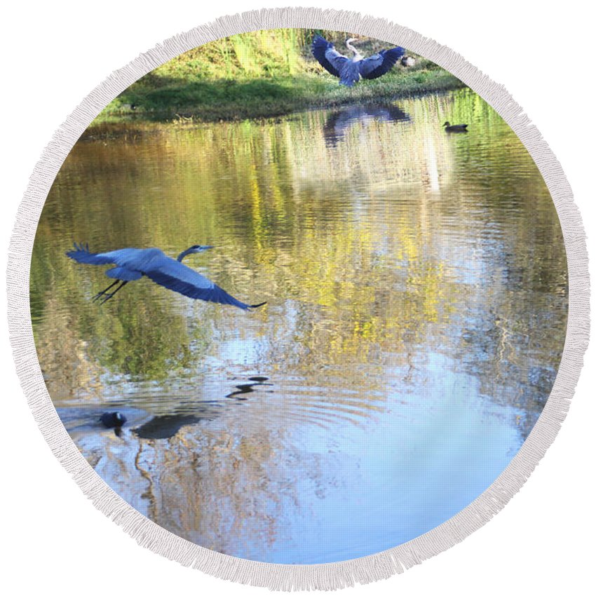 Blue Round Beach Towel featuring the photograph Blue Herons On Golden Pond by Diana Haronis