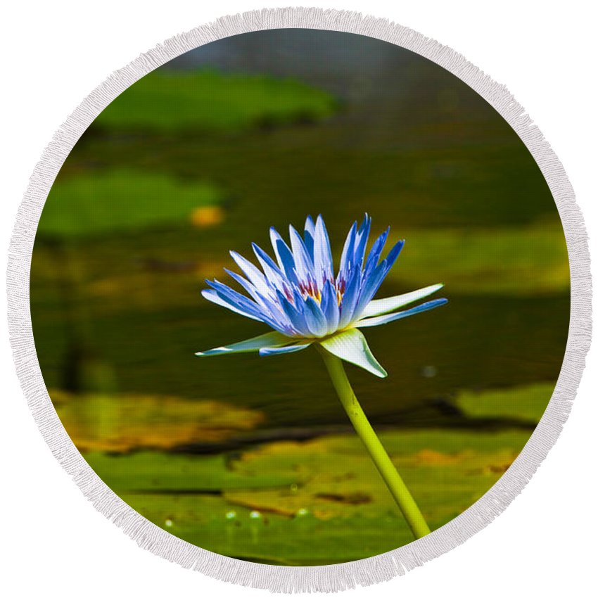 Lily Round Beach Towel featuring the photograph Blue Lily by Darren Burton