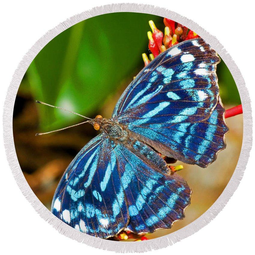 Blue Butterfly Round Beach Towel featuring the photograph Blue Wave Butterfly by Millard H. Sharp