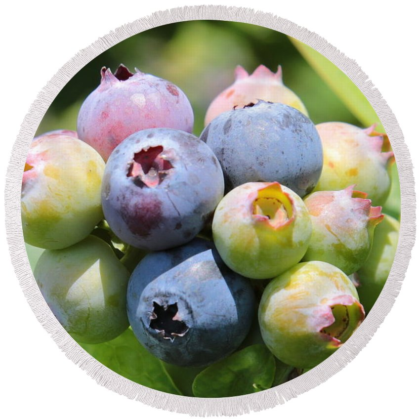 Blueberry Round Beach Towel featuring the photograph Blueberries Closeup by Carol Groenen