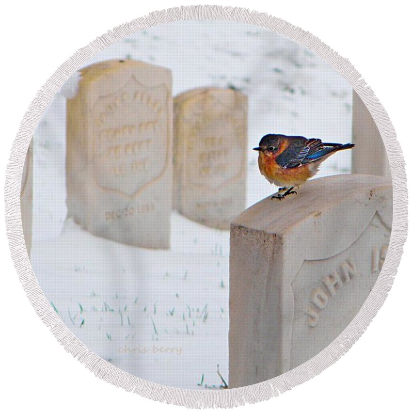 Cemetery Round Beach Towel featuring the photograph Bluebird by Chris Berry