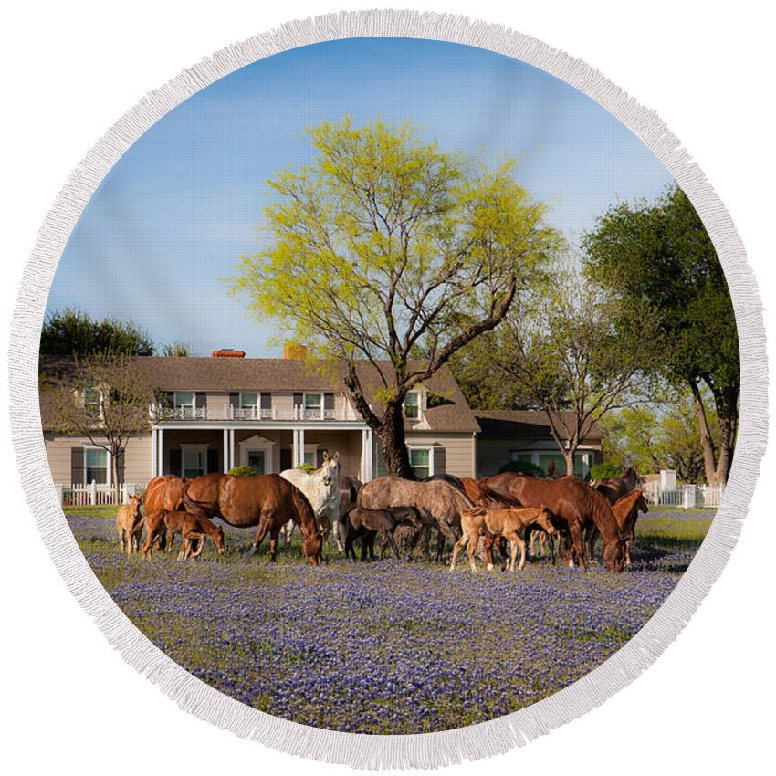 Horse Round Beach Towel featuring the photograph Bluebonnet Heaven by Kelli Brown