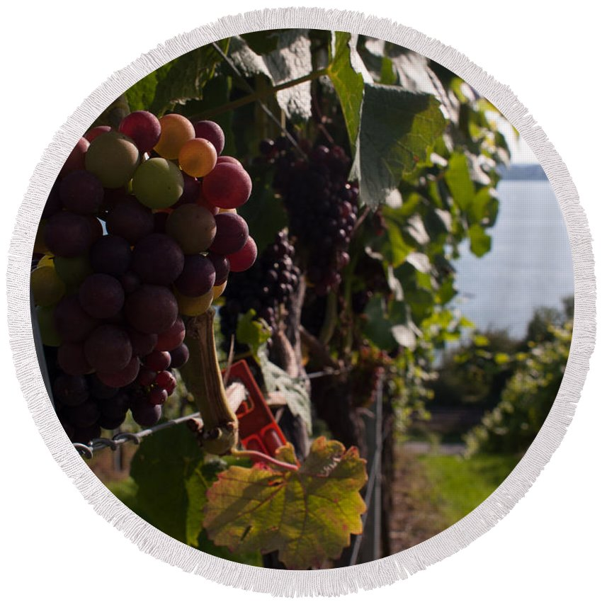 Miguel Round Beach Towel featuring the photograph Bodensee Vineyards by Miguel Winterpacht