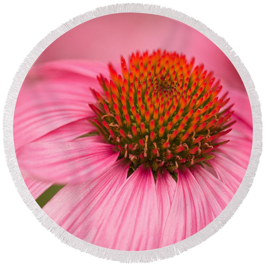 Coneflowers Round Beach Towel featuring the photograph Boldly Summer by Lindley Johnson