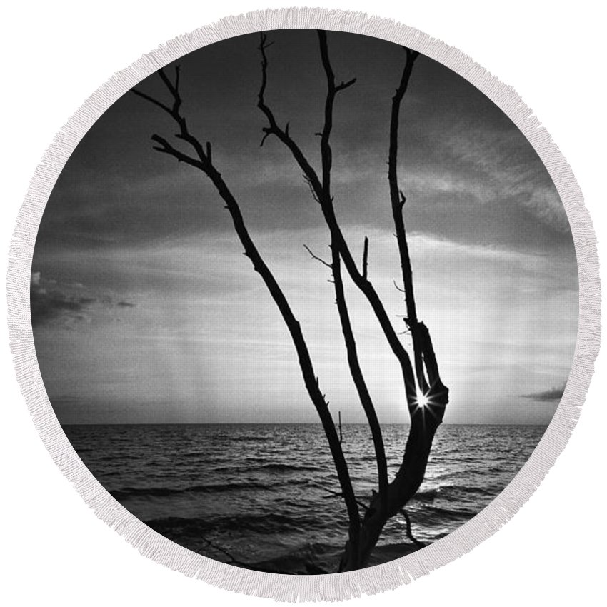 Florida Round Beach Towel featuring the photograph Bonita Beach Tree Black And White by Bradley R Youngberg