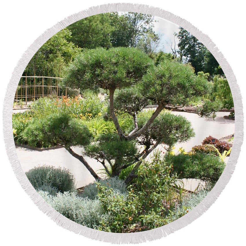 Bonsai Round Beach Towel featuring the photograph Bonsai In The Park by Christiane Schulze Art And Photography